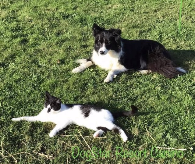 Animales domésticos. Perro. Gato. Servicio de recogida de animales. Mascotas