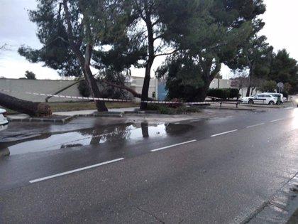 Los Bomberos realizan varias salidas en la capital aragonesa por el fuerte viento