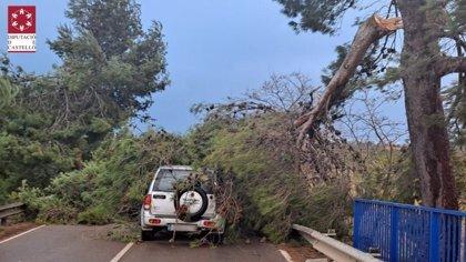 Los bomberos realizan 12 servicios por el viento en Castellón, la mayoría por caída de árboles