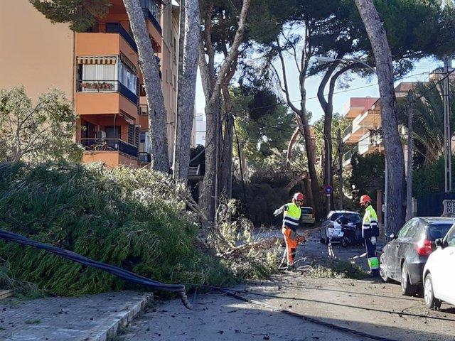 Daños ocasionados en una calle de Palma por la borrasca 'Hortense'.