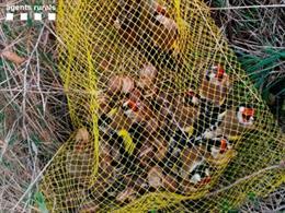 Ocells que han capturat caçadors furtius a la Noguera (Lleida)
