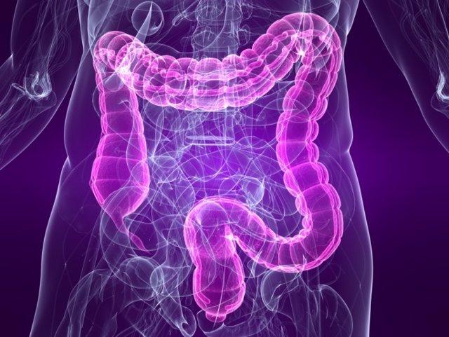 Intestinos, colon
