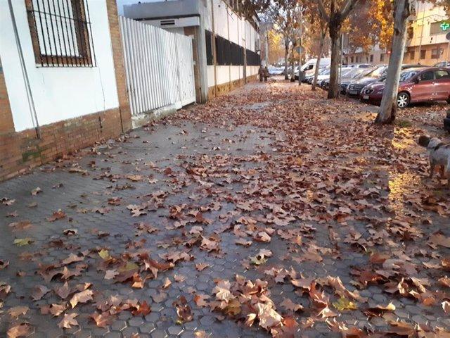 Hojas caídas en las calles de Sevilla