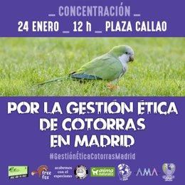 CARTEL CONCENTRACIÓN CONTRA EL EXTERMINIO DE COTORRAS EN MADRID