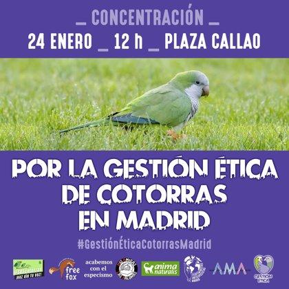 """Argentina.- Animalistas se concentrarán hoy en Callao (Madrid) contra el """"exterminio"""" de las cotorras argentinas"""