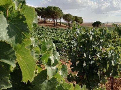 La Junta destina 230.000 a las Rutas del Vino de CyL para reactivar el enoturismo