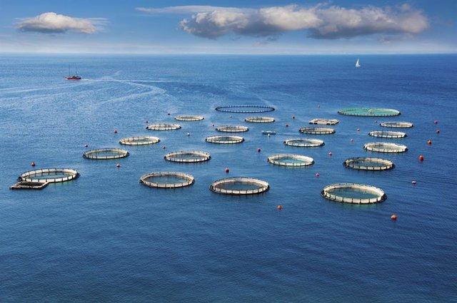 Once Lineas Estrategicas Para Relanzar La Acuicultura Andaluza En El Marco 2021 2030 (Consejería De Agricultura, Ganadería, Pesca Y Desarrollo Sostenible)