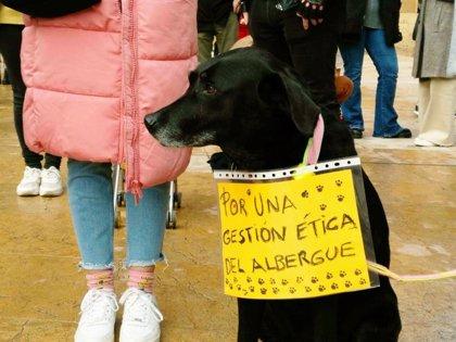 Somos pide a Canteli que se pronuncie sobre la situación en el albergue de animales