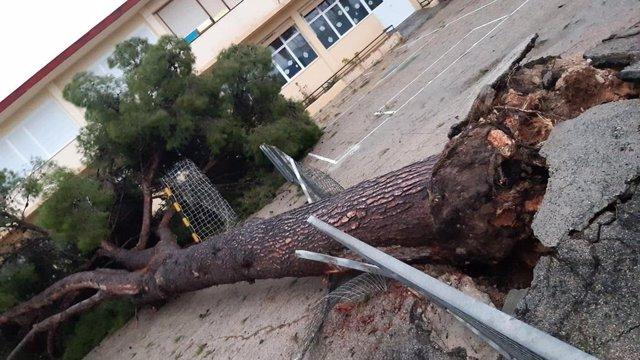 Viento, árbol caído