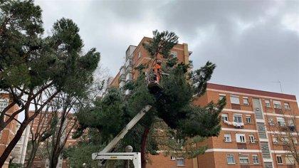 Más de 1.600 toneladas de arbolado dañado tras 'Filomena' se convertirán en materia orgánica para zonas verdes de Madrid