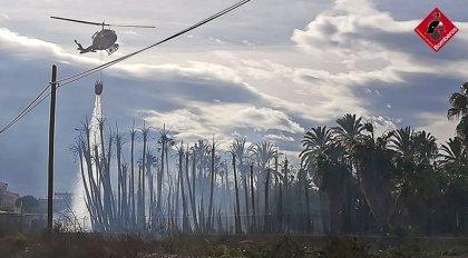 Un incendio afecta a 7.000 metros cuadrados de un vivero de palmeras en Albatera