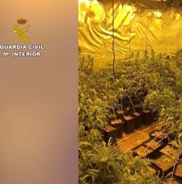 Descubren un chalé de Miraflores con 880 plantas de marihuana, que distribuían por la zona norte de la región