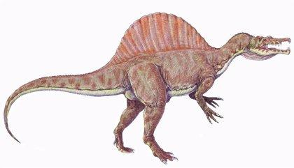 Spinosaurus actuó más como zancuda que como perseguidor acuático