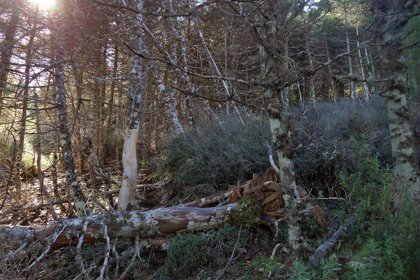 El Gobierno avanza en el Proyecto de Ley para declarar el Parque Nacional de la Sierra de las Nieves