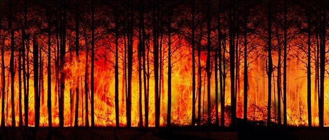 Incendio forestal. Fuego.