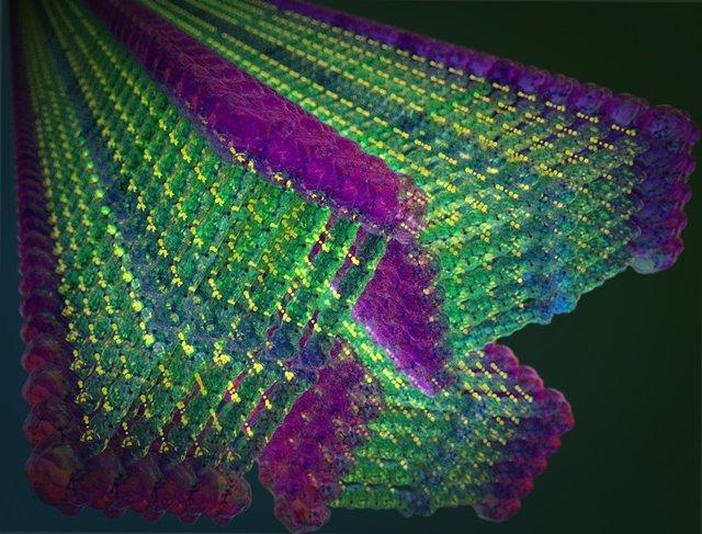 """Los investigadores del MIT han diseñado pequeñas moléculas que forman espontáneamente nanocintas cuando se agrega agua. Estas moléculas incluyen un dominio de """"aramida"""" inspirado en Kevlar en su diseño, en verde, que fija cada molécula en su lugar."""