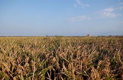 AVA-ASAJA acusa a la CE de eludir la crisis agraria y ambiental que provocan los acuerdos comerciales