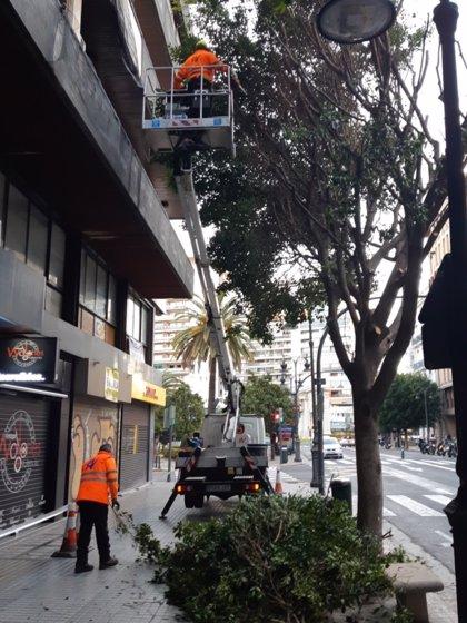 Arranca la poda de los 76 ficus de la calle Colón, sin cortar desde 2017