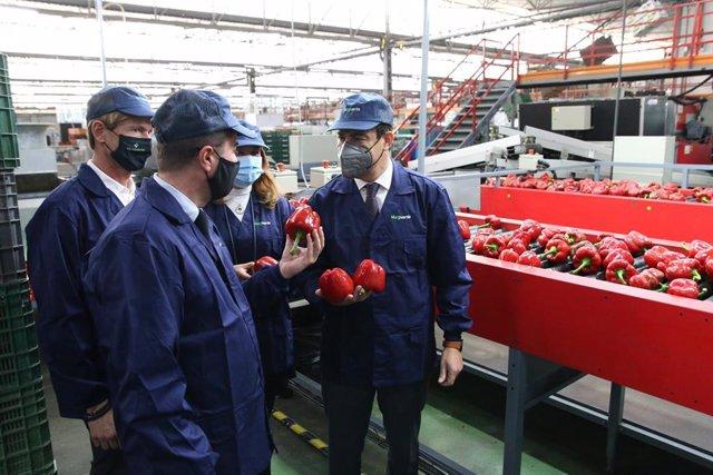 El presidente de la Junta de Andalucía, Juanma Moreno, visita la empresa agrícola Murgiverde en El Ejido (Almería)