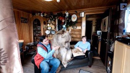 DESCONECTA.-Un oso sentado en un sofá viendo la tele es lo más normal en casa de esta familia rusa