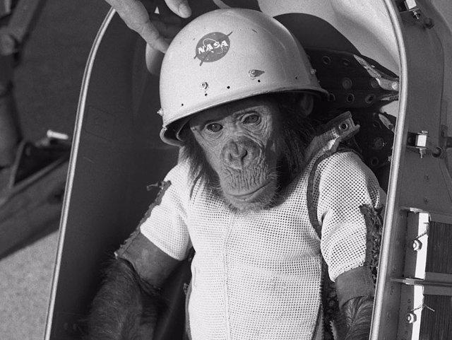 Ham, el primer primate que sobrevivió a un vuelo espacial