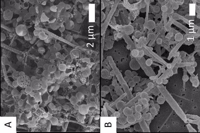 Imágenes de biomorfos orgánicos compuestos por filamentos y esferas en condiciones de pre-silicificación (A) y biomorfos con estructuras / morfologías / formas originales conservadas (B) después de dos semanas de silicificación experimental.