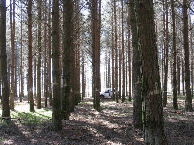 Imagen de archivo de un bosque.