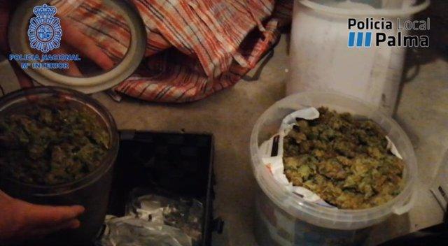 Marihuana hallada en el punto de venta de droga de Palma.