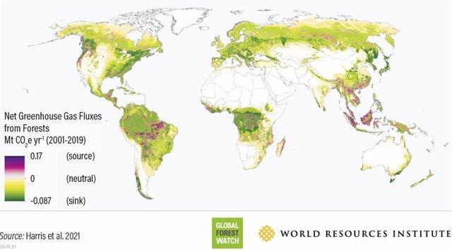 Relación de sumidero/emisor de carbono entre los bosques a escala global