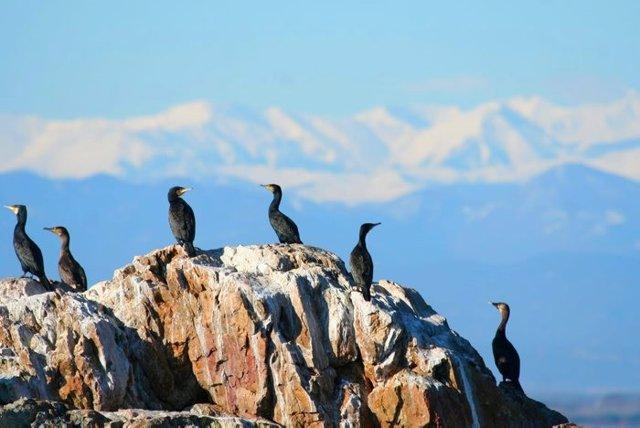 Aves en el Parc Natural del Cap de Creus