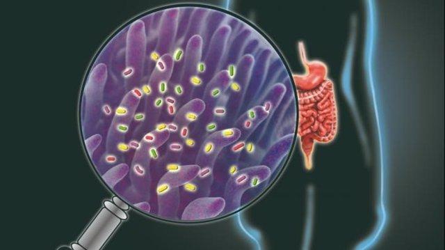 Una ilustración de la forma no invasiva de identificar las principales funciones del tracto gastrointestinal.