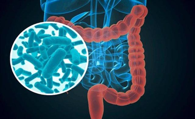 Estudio sobre la afección de la dieta en el embarazo en la microbiota