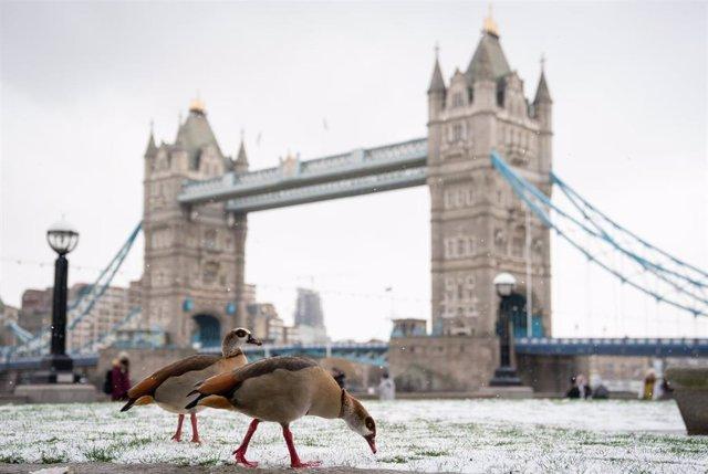 Tower Bridge, en el centro de Londres