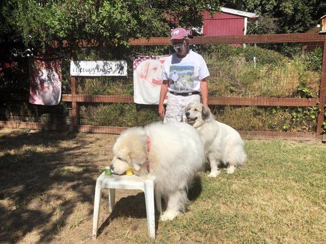 El autor del estudio, Tommy Dickey, demuestra cómo lleva a cabo un sencillo entrenamiento de detección de olores con sus propios perros. Estos perros no formaron parte de la investigación publicada.