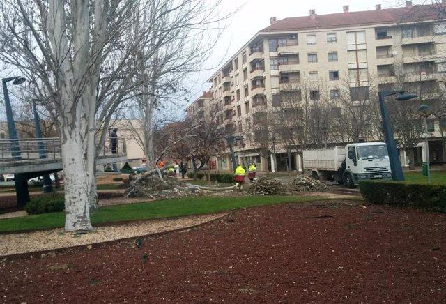 Operarios cortan un árbol caído en el Parque San Adrián de Logroño