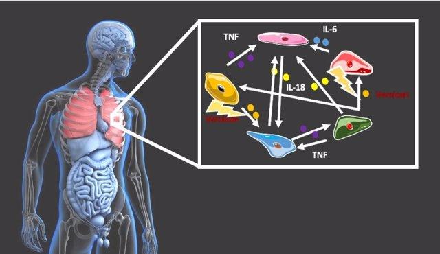 Imagen de pulmones humanos.