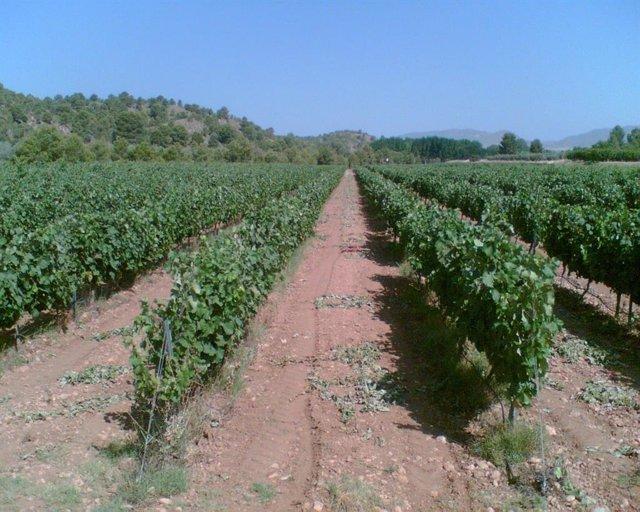 Viña, viñedo, uva, agricultura, campo