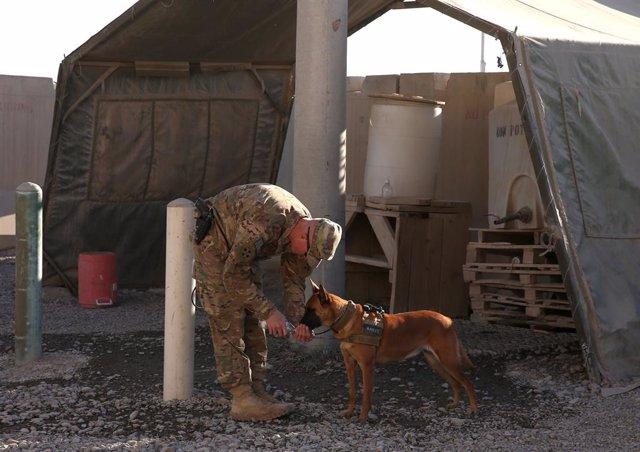 Perro con un soldado en Afganistán