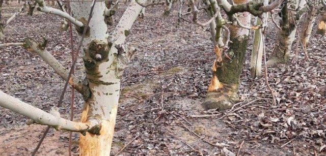 Agro.- Unió de Pagesos trabajará para una nueva ley de caza que responda a los daños de la fauna
