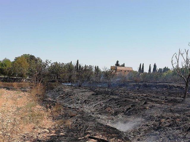 Archivo - Cvirus.- El confinamiento redujo un 34 por ciento los incendios forestales en 2020