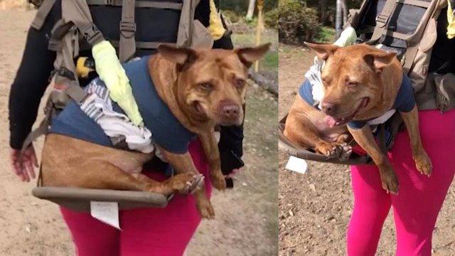 Este perro anciano sigue yendo de excursión con su dueño gracias a este invento de su dueño
