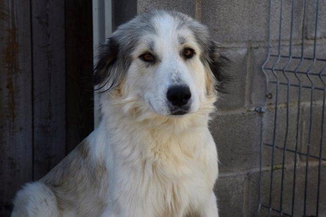 Más de 300 perros encuentran hogar en 2020 gracias al servicio de recogida de animales de la Diputación de Huesca.