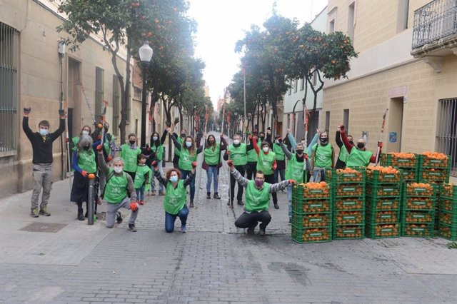 Un total de 25 voluntaris de diverses entitats del districte barceloní de Sant Andreu recullen taronges dels arbres dels carrers per transformar-les en melmelada.