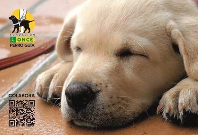 Perro guía de Fundación ONCE