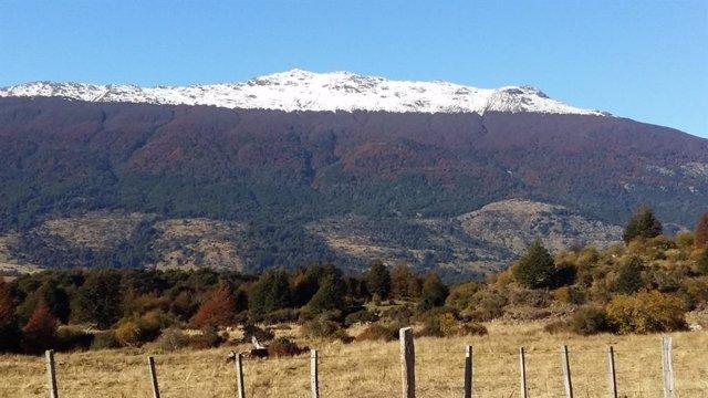 Límite del bosque en los Andes