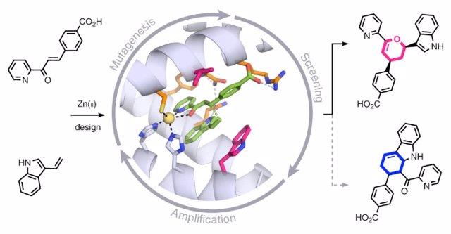 Enzima artificial diseñada mediante simulación computacional