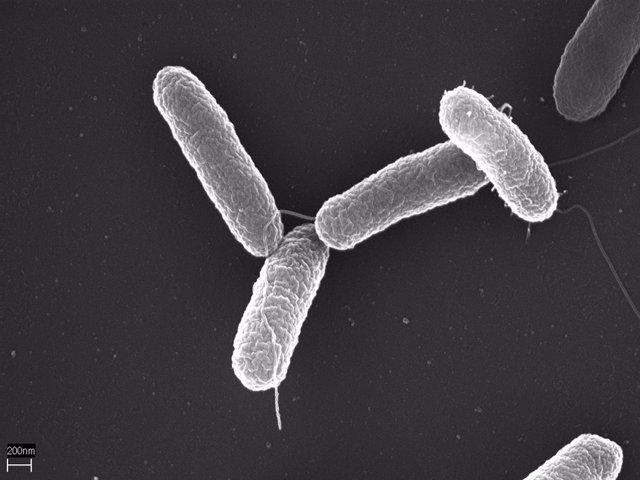 Imagen al microscopio de Salmonella enterica serovar Typhimurium.