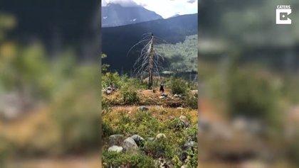 Un oso negro salvaje irrumpe el paseo de unos excursionistas dándoles el susto de sus vidas