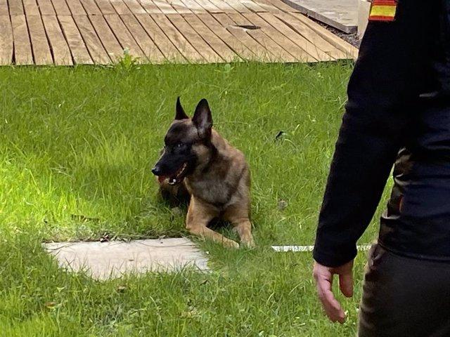 La Asociación Escan selecciona a los perros para el programa de terapia emocional.