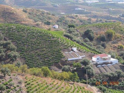 La Junta muestra su apoyo el modelo de secado de la uva pasa de Málaga impulsado por su asociación